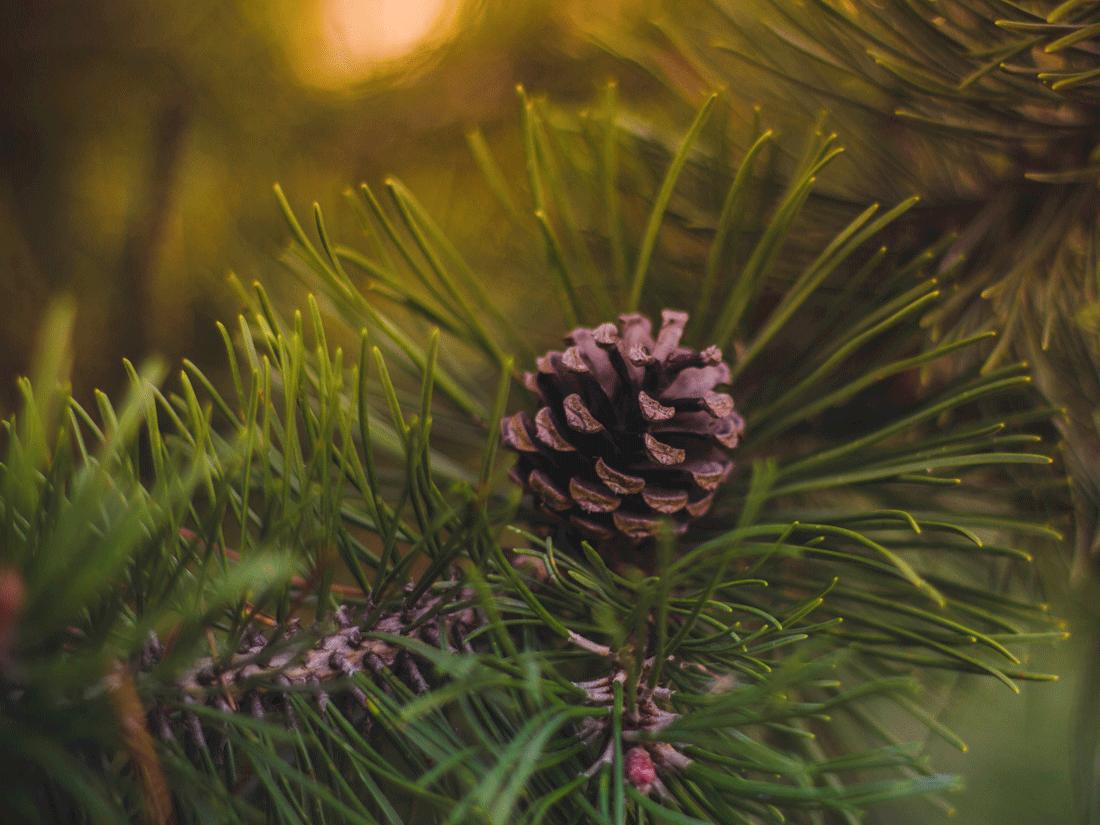 idée-cadeaux-noels-2015