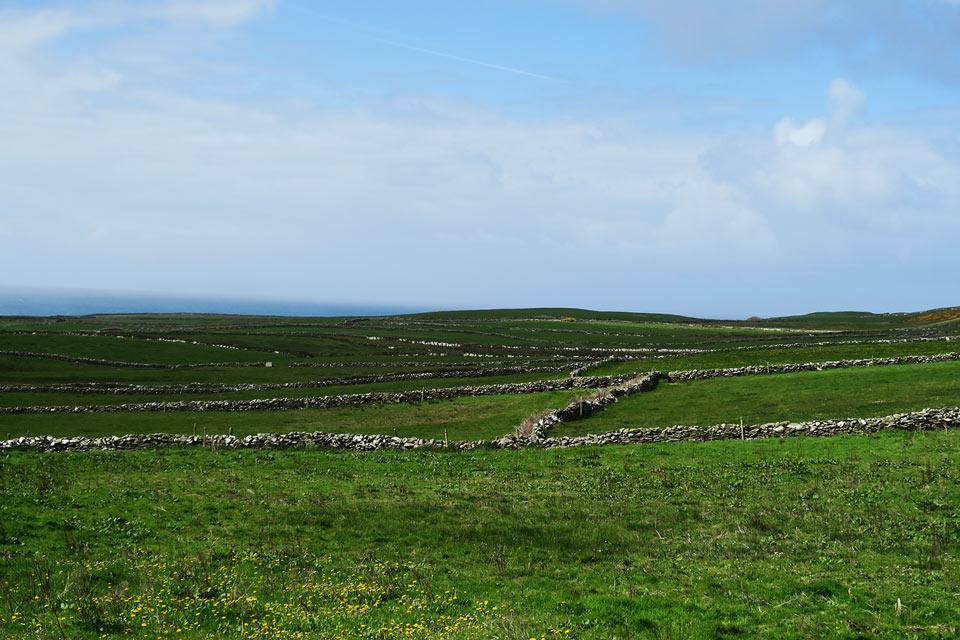 ireland meadow